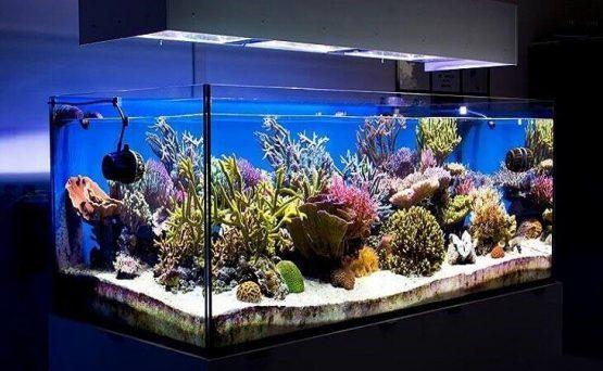 Удивительный домашний аква мир